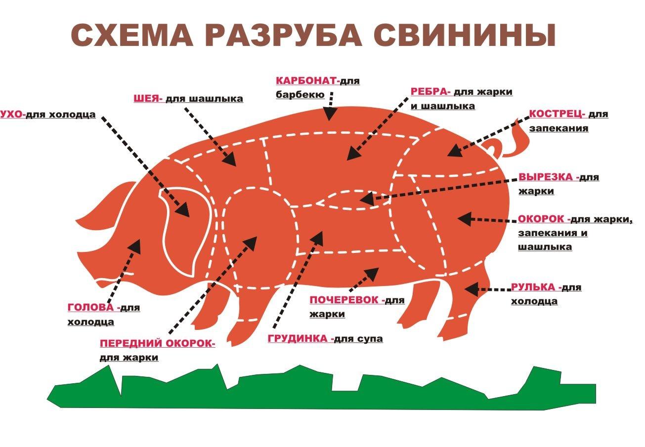 французский названия частей свинины с фото мой взгляд должен